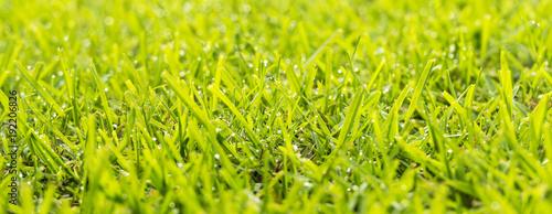 In de dag Gras Grass Dew Drops