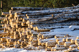 firewood in the snow. Sawmill - 192209472