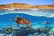 Leinwanddruck Bild Turtle swimming underwater in Red Sea, Egypt