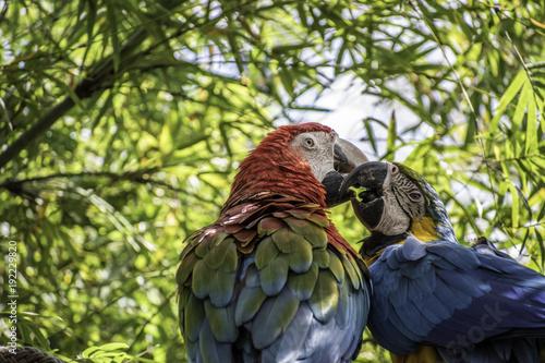 Aluminium Papegaai Parrots Kissing