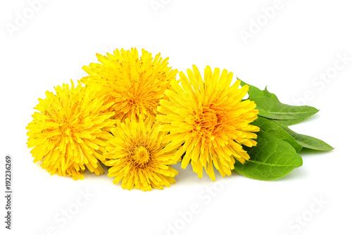 Fototapeta Dandelion flowers isolated.