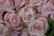 Quadro Pale pink roses
