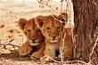 Quadro Lion cubs