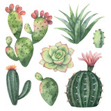 Watercolor vector set of cacti and succulent plants isolated on white background. - 192267047