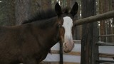 Foal in corral in the summer. The horse turns and looks at us. - 192282054