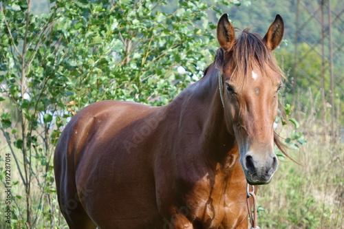 Fotobehang Olijf The Carpathian horse. Mountains of the Carpathians. Transcarpathia