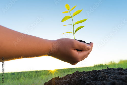 Foto op Canvas Natuur hands holding green plant