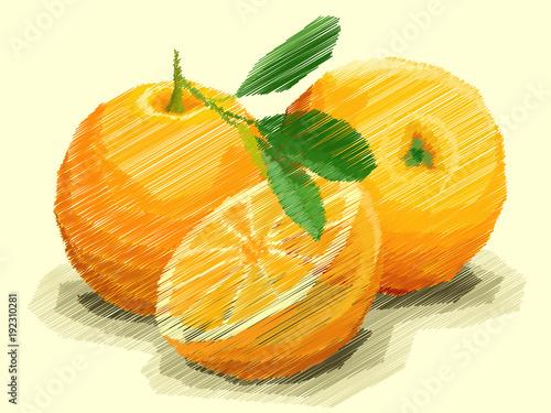 Vector illustration of drawing fruit oranges.