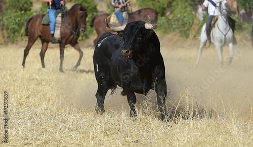 Aluminium Bison spanish bull