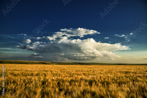 beautiful-wheat-field