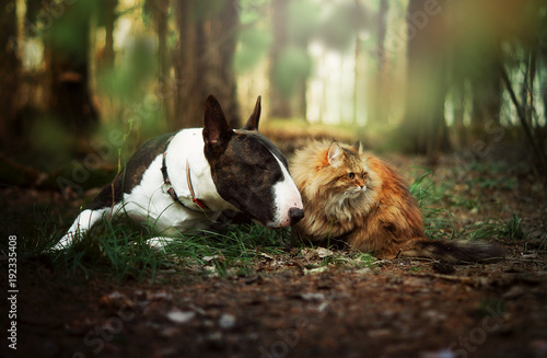 Dog and cat in forest