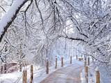 Winter scenery, snowstorm in park. - 192342659