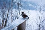 Bird  near  lake  Morskie  Oko