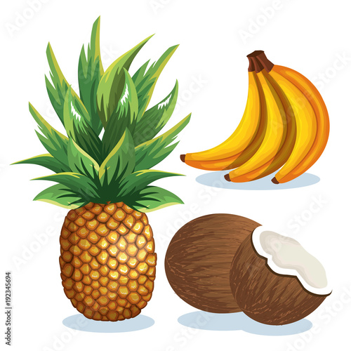 set tropical fresh fruits vector illustration design fruits, leaves and flowers, summer and exotic concept. Banana, pineapple, coconut