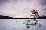 Sunset view of small trees in winter near the frozen lake - 192371425