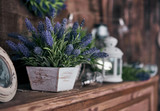 Fototapety pot of lavender on the shelf