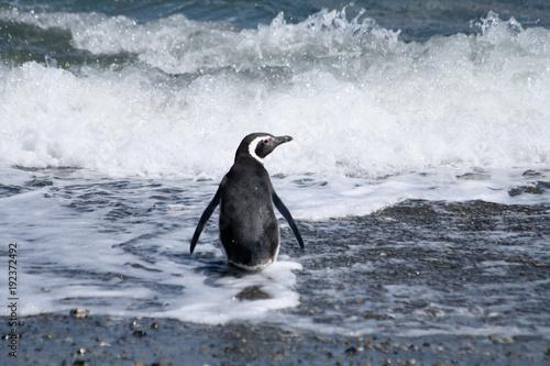 Fotobehang Pinguin penguin in the beach