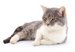 Quadro Cat on a white background