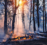 Forest fire. fallen tree is burned to the ground a lot of smoke when vildfire - 192380868