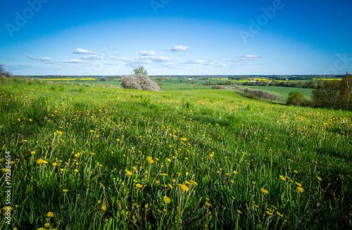 Foto Murales Summer meadow