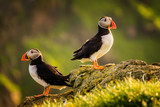 Puffin couple - 192386069