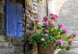 Lourmarin (Vaucluse) Hotensias et volet bleu, Luberon, Provence, France