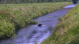 a bear swimming in a canal - 192401833