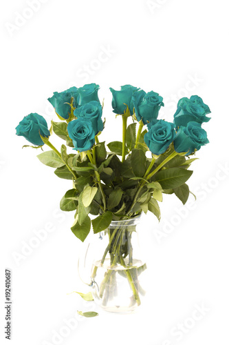 Beautiful Teal Roses on a White Background