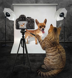 The cat photographer...