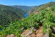 Vineyards along Sil River, Ribeira Sacra, Lugo, Spain