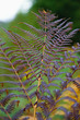 Natural background of colorful fern in the forest