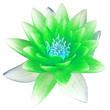 Quadro  fleur verte de nénuphar