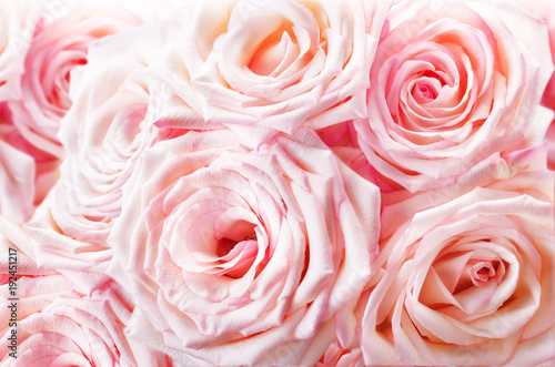 Różowe róże tło