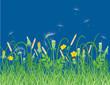 Wildflowers on a summer meadow