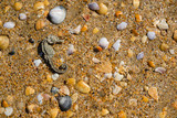 dried seahorse, shells and stones on the sand beach. - 192477430