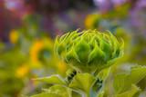 a young sunflower on a flower garden.