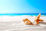 beautiful sea shells on the seashore with room for a product or advertising text   - 192482882