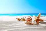 beautiful sea shells on the seashore with room for a product or advertising text   - 192482892