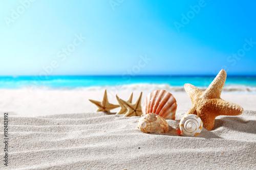 piękne morskie muszle nad morzem z miejscem na produkt lub tekst reklamowy