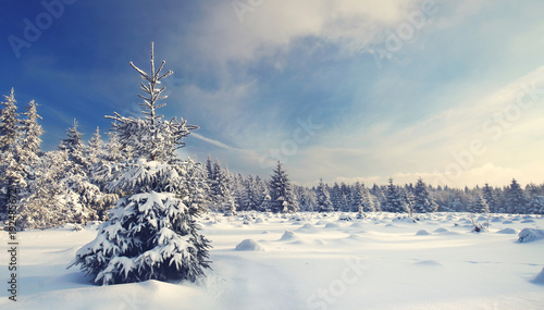 Tuinposter Weg in bos fresh snow covered tree in amazing winter landscape