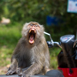 Monkey sitting on a motorbike, Thailand. Travel and tourism. - 192498458