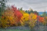 Varicolored trees of greenwood in fall season. - 192499626