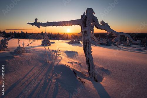 Staande foto Nachtblauw Winterlandschaft im Schwarzwald
