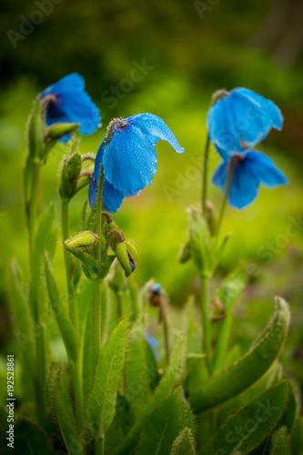 Fotobehang Iris Iceland