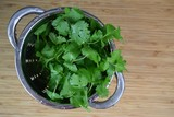Washed cilantro in colander - 192529215