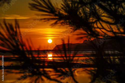 Foto op Aluminium Zee zonsondergang Behind the tree