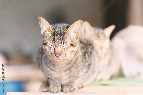 Portrait of cute cat sitting and close the eyes Poster