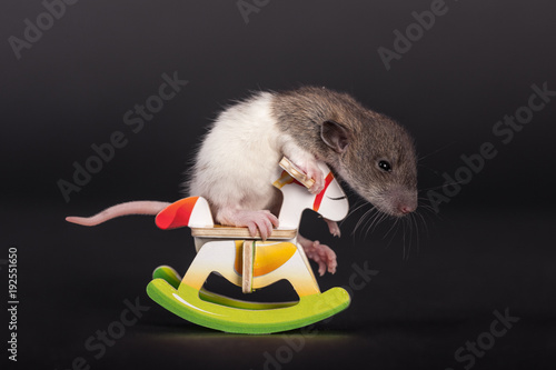 baby rat on toy horse