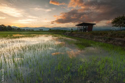 Aluminium Cappuccino sunrise at rice paddy field at Kota Belud, Sabah Malaysia.