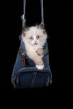 Funny little kitty in a bag